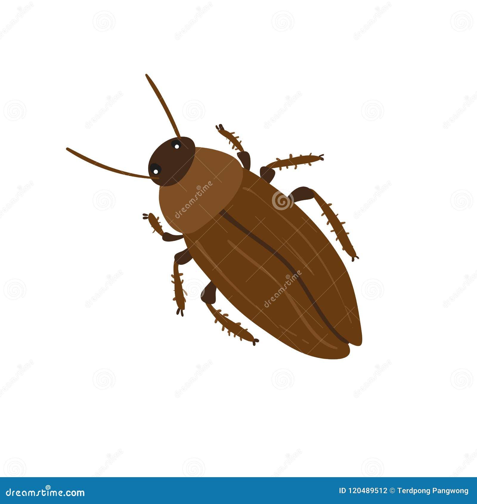 Het vectorontwerp van het kakkerlakkenkarakter