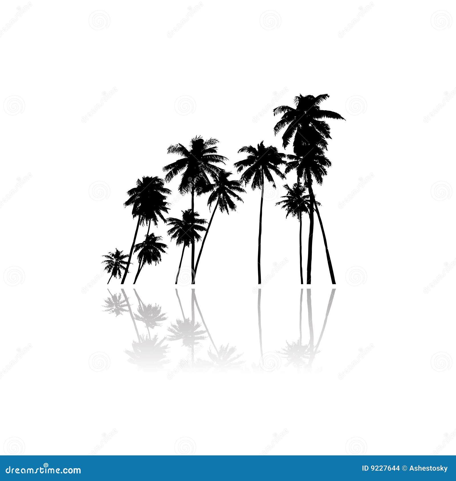 Het vectorsilhouet van palmen