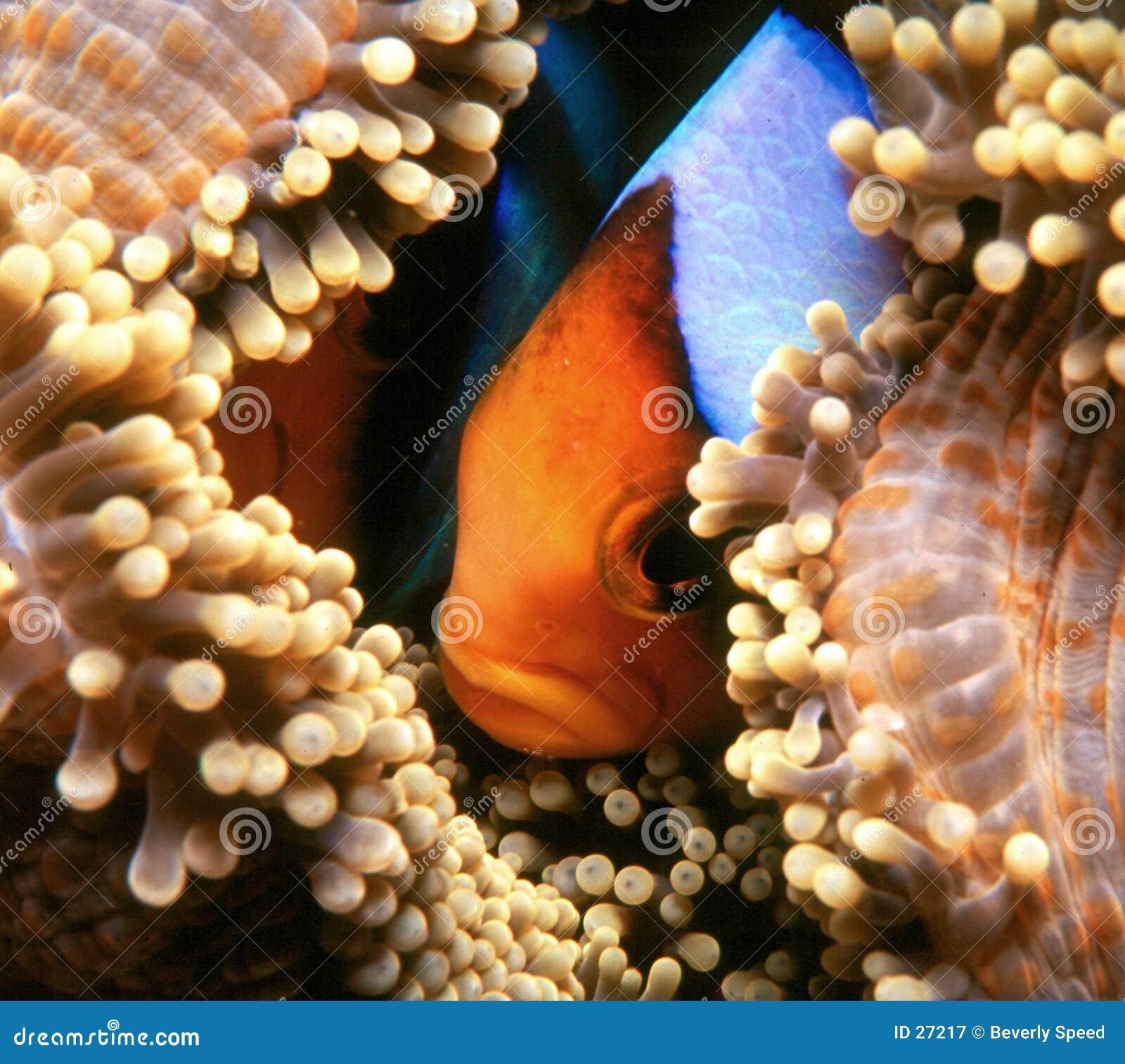 Het verbergen Nemo