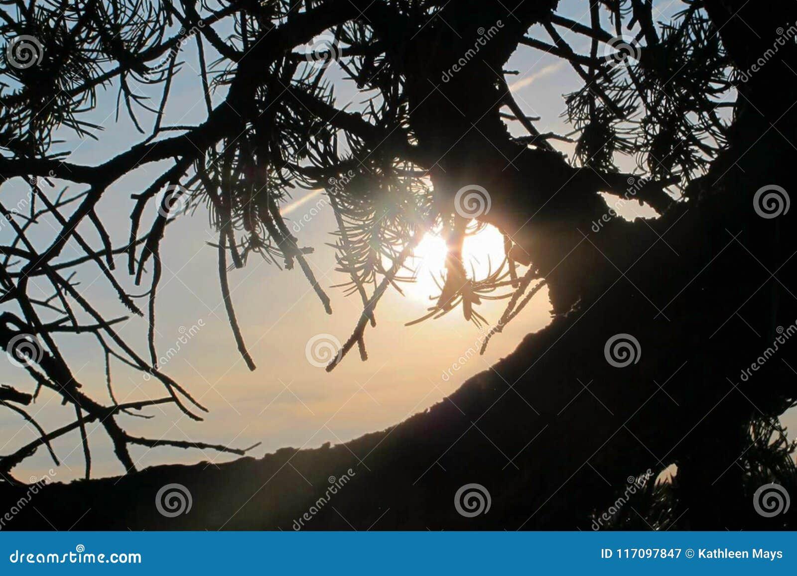 Het verdraaide Silhouet van de Woestijnjeneverbes door de Schemeringzon