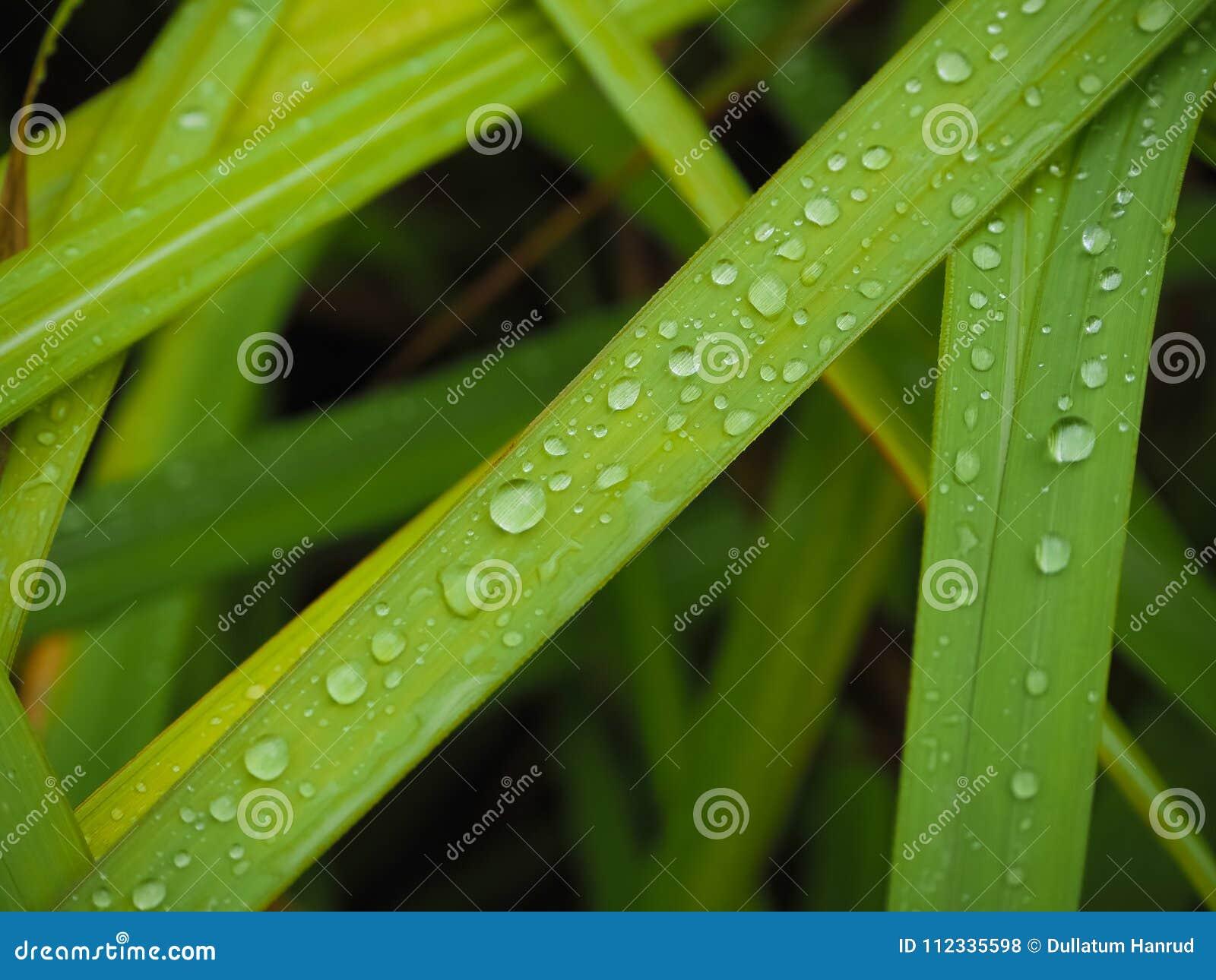 Het verfrissen zich in het regenachtige seizoen