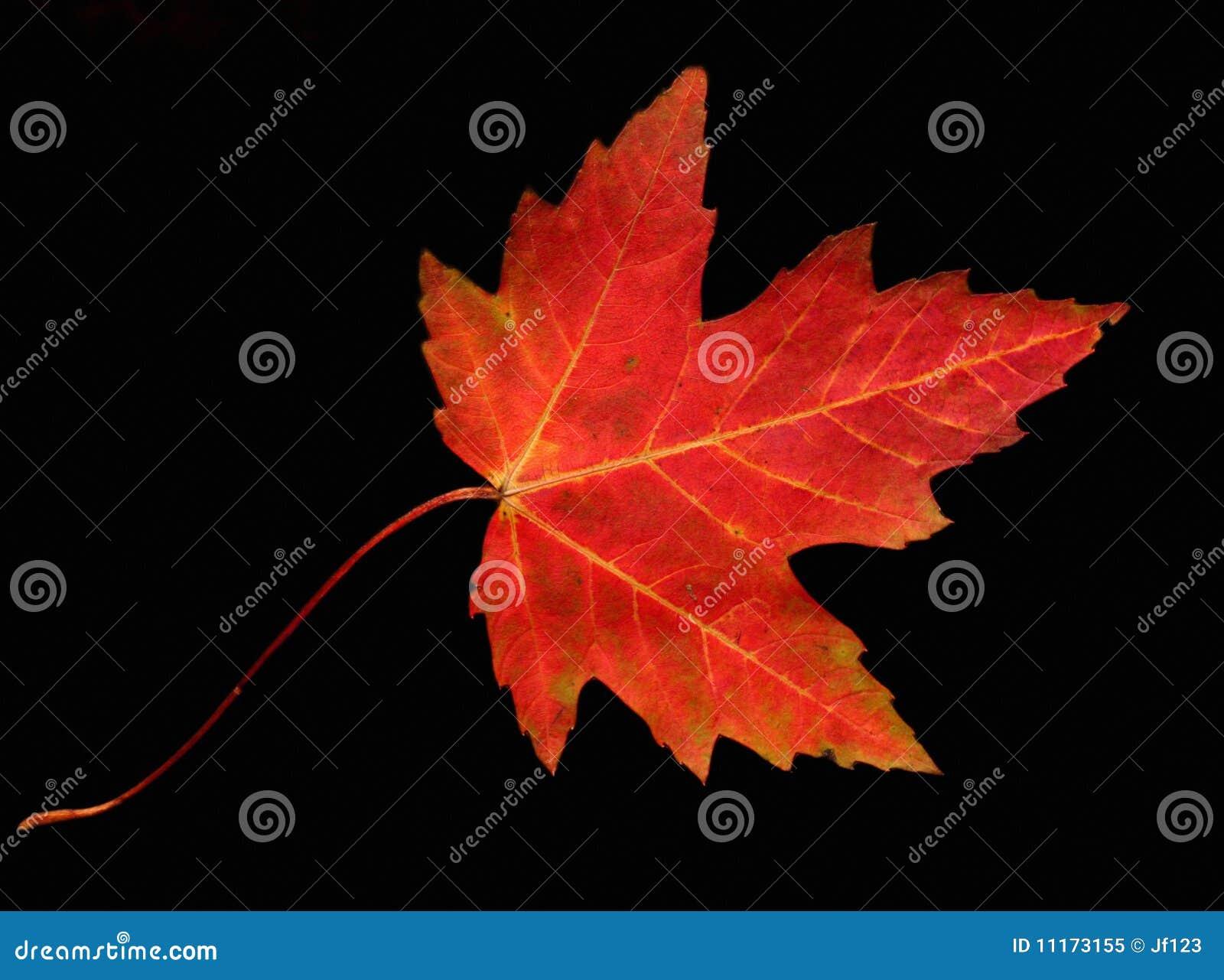Het verlof van de herfst
