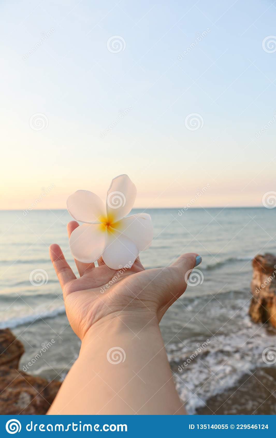 Het vieren vakantie met een bloem en een overzees