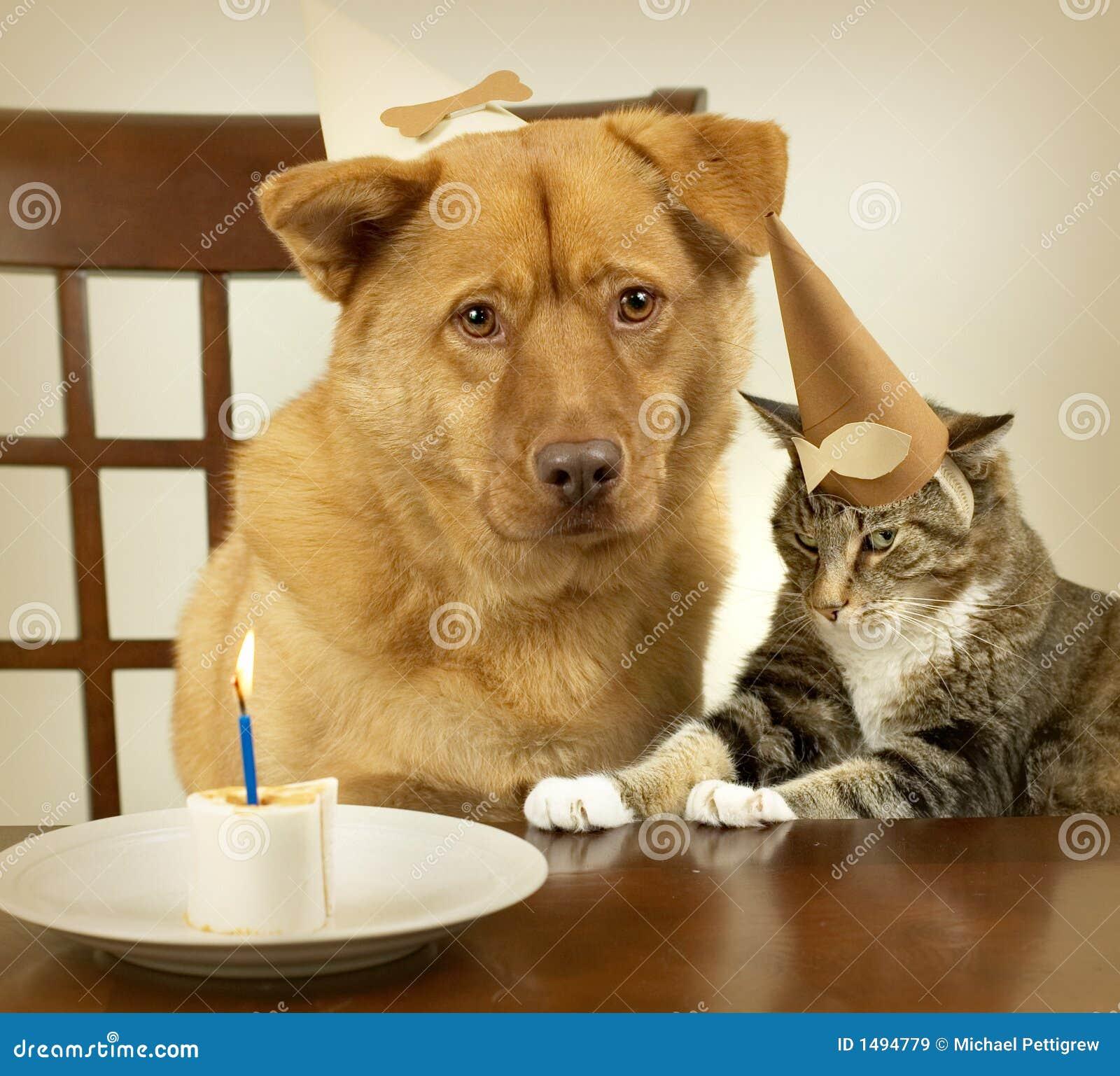 Het vieren van de hond en van de kat Verjaardag