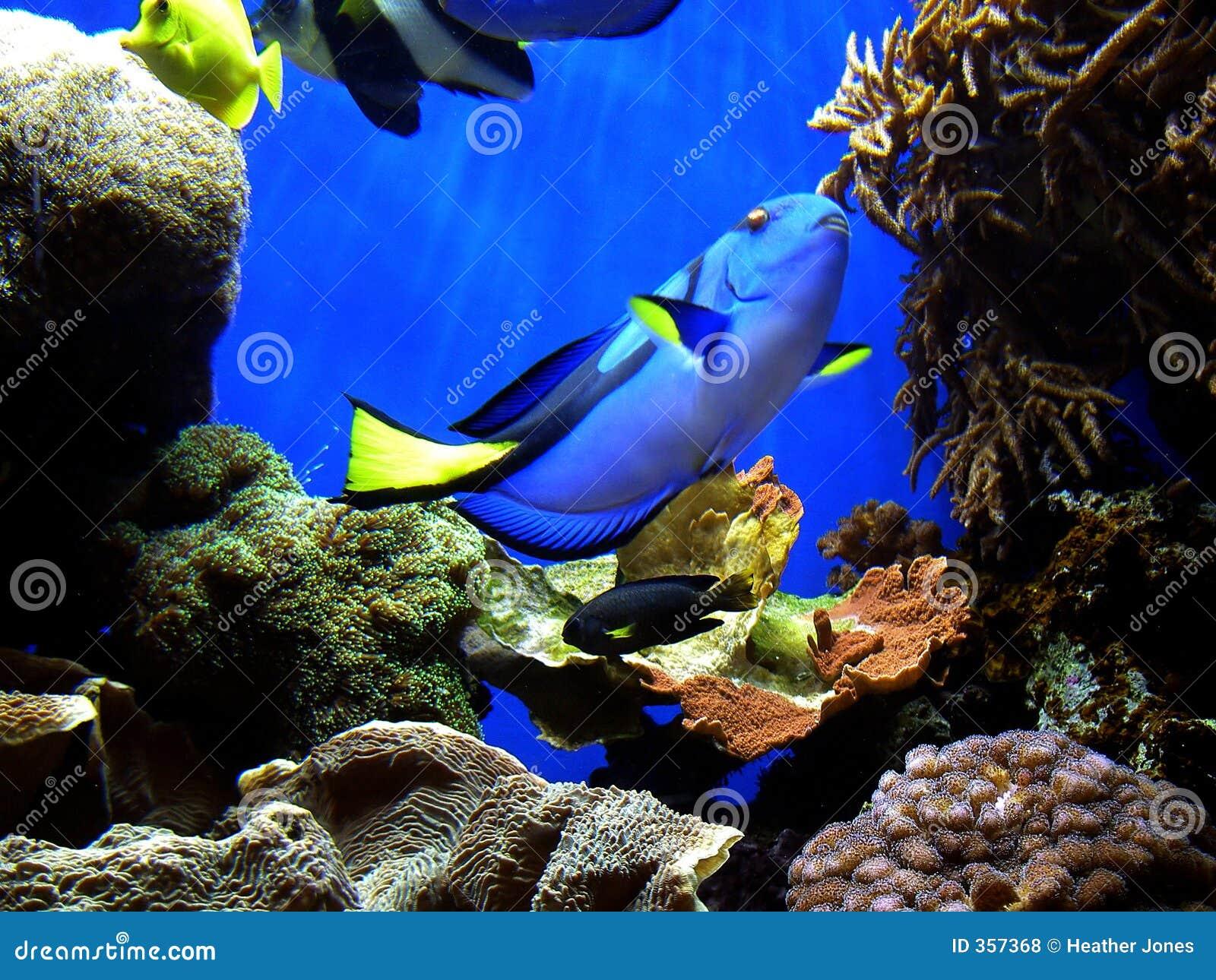 Het vinden van Dory van Nemo