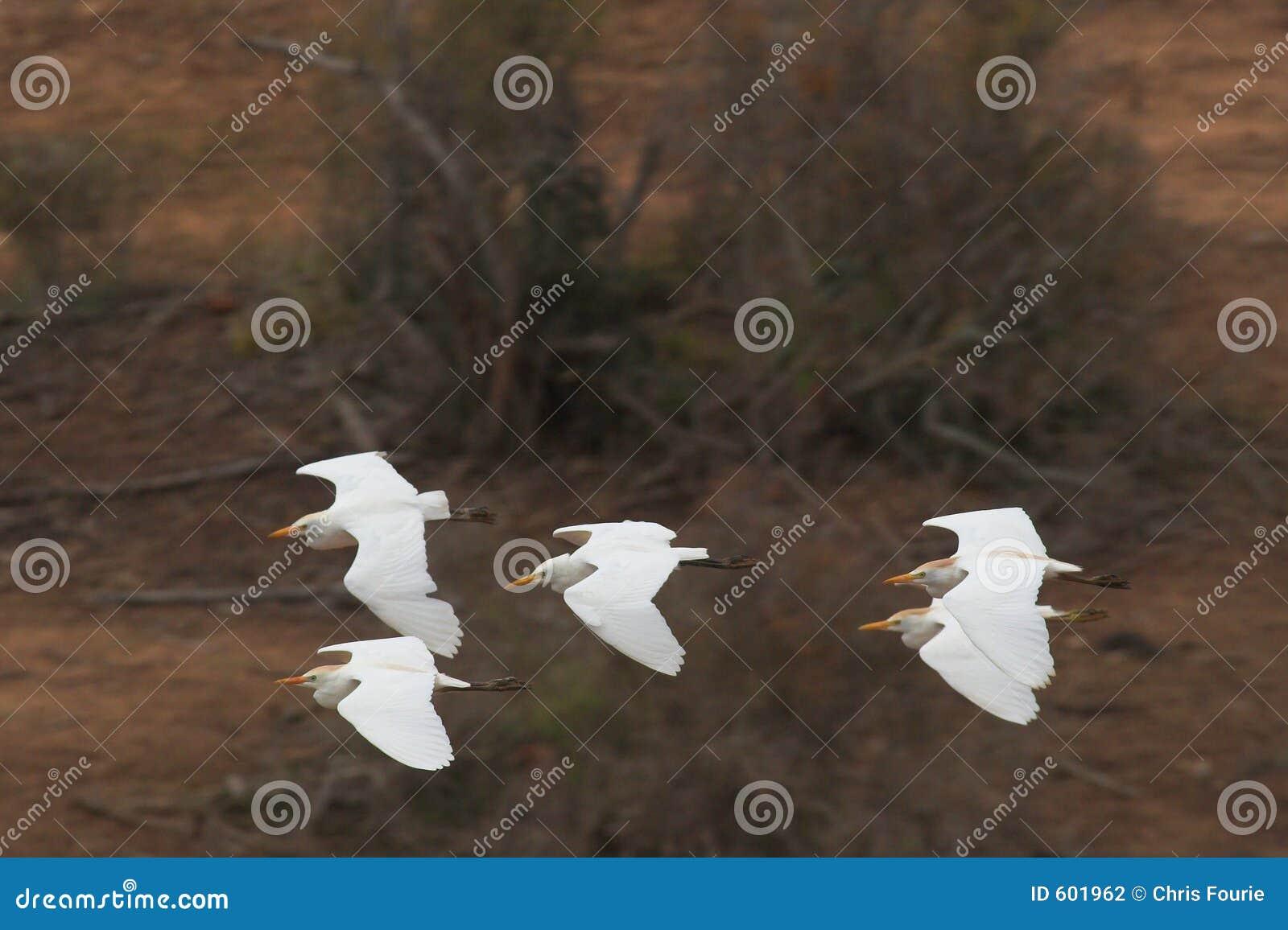 Het Vliegen van de vorming