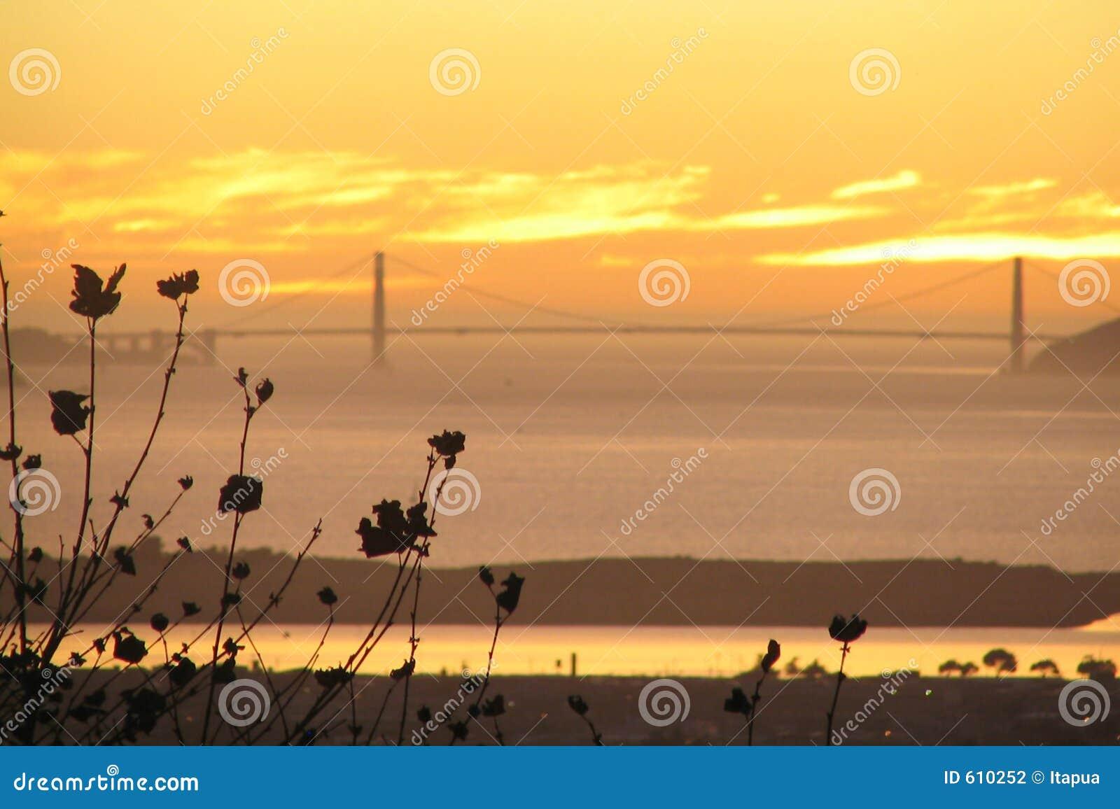 Het vliegtuig tree_SF bay_Golden Poort