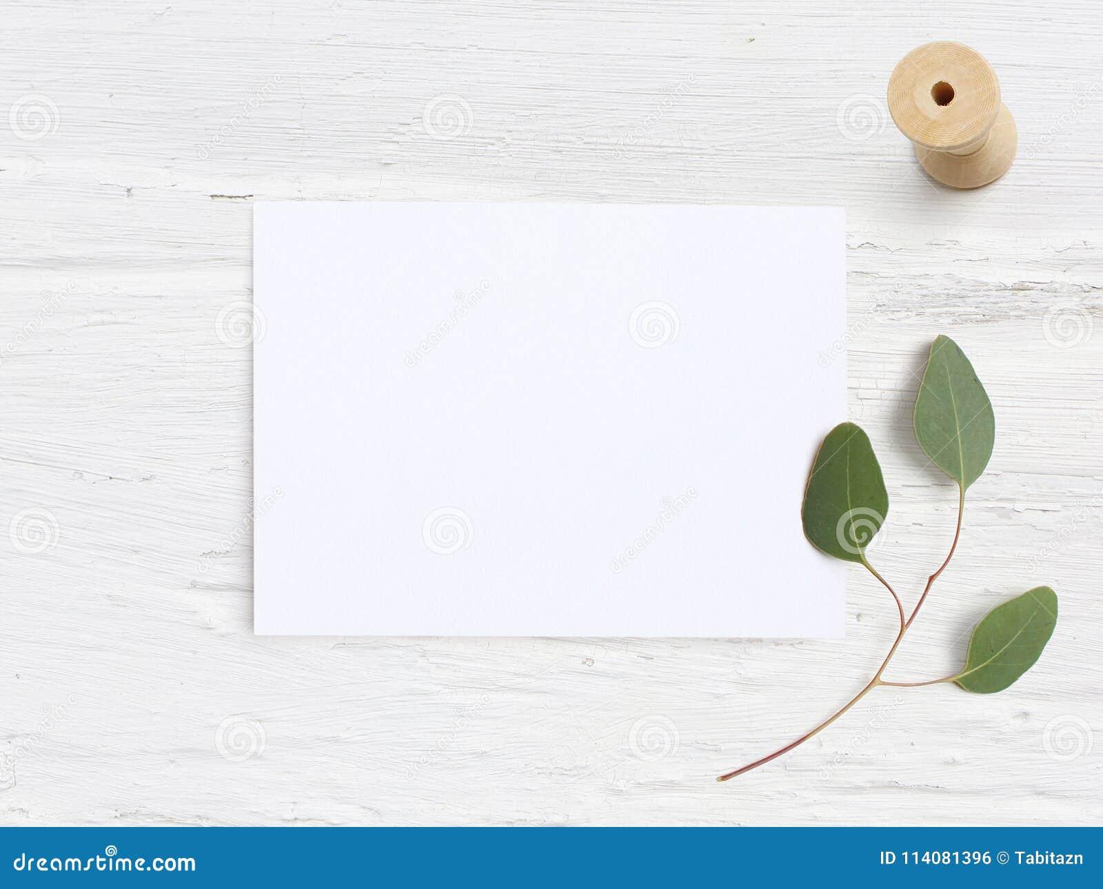 Het vrouwelijke model van de huwelijksdesktop met lege document kaart, de houten spoel en Eucalyptuspopulus vertakken zich op wit