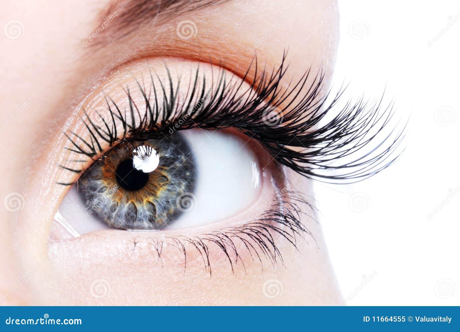 Het vrouwelijke oog van de schoonheid met krul lange valse wimpers
