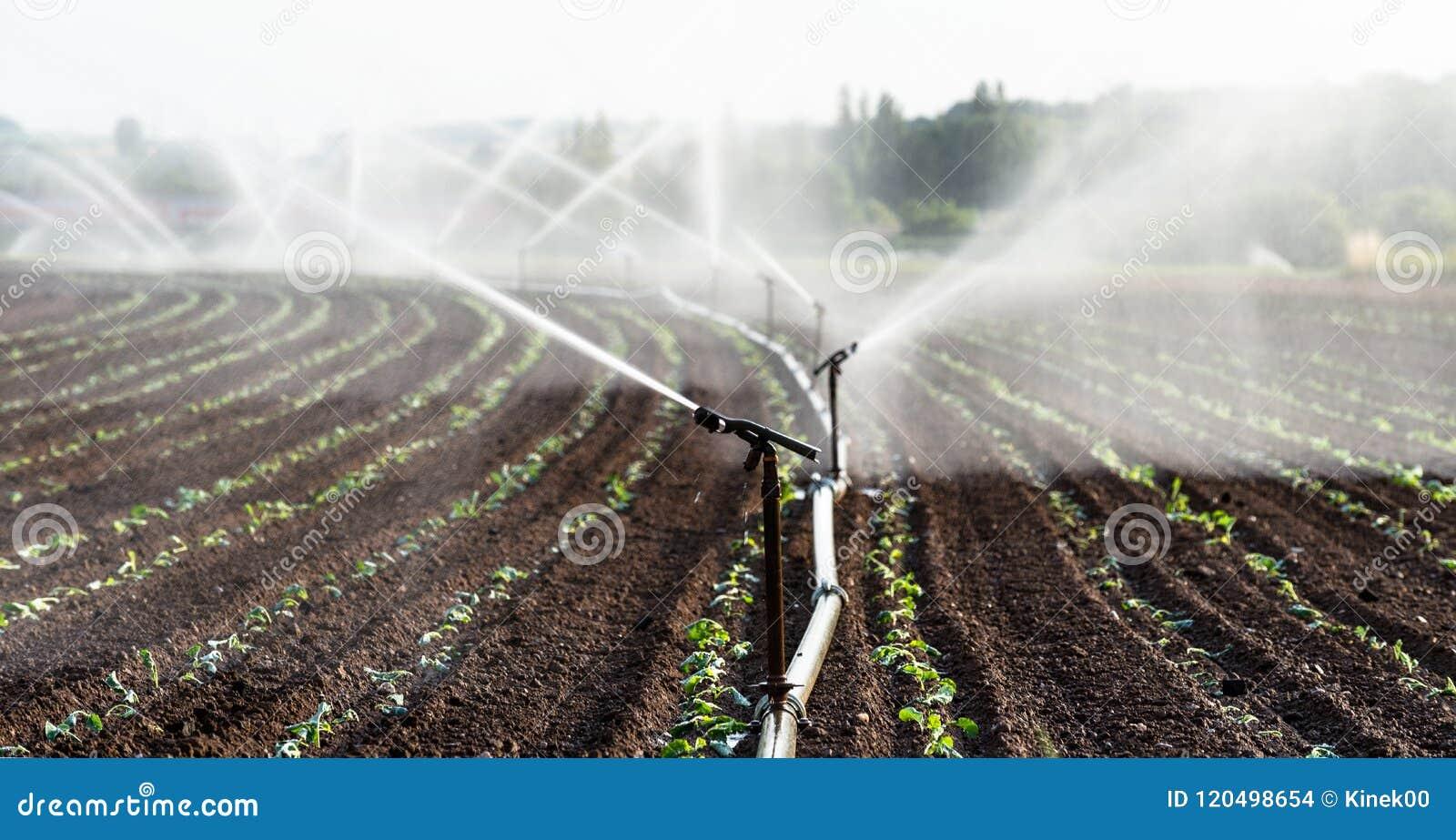 Het water geven van gewassen in West-Duitsland met Irrigatiesysteem die sproeiers op een gecultiveerd gebied met behulp van