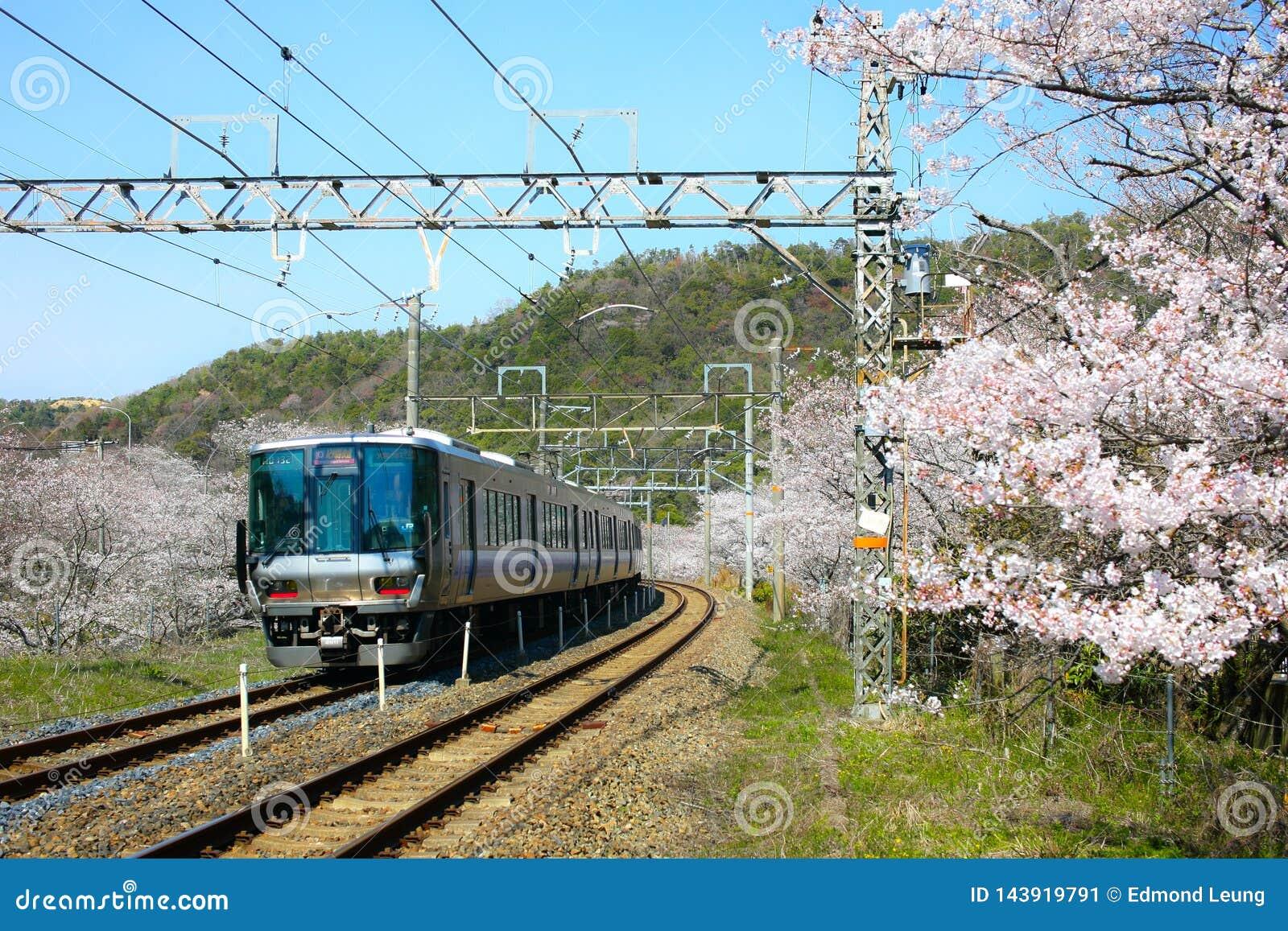 Het Weergeven van de lokale trein die van Wakayama op sporen reizen met bloeit