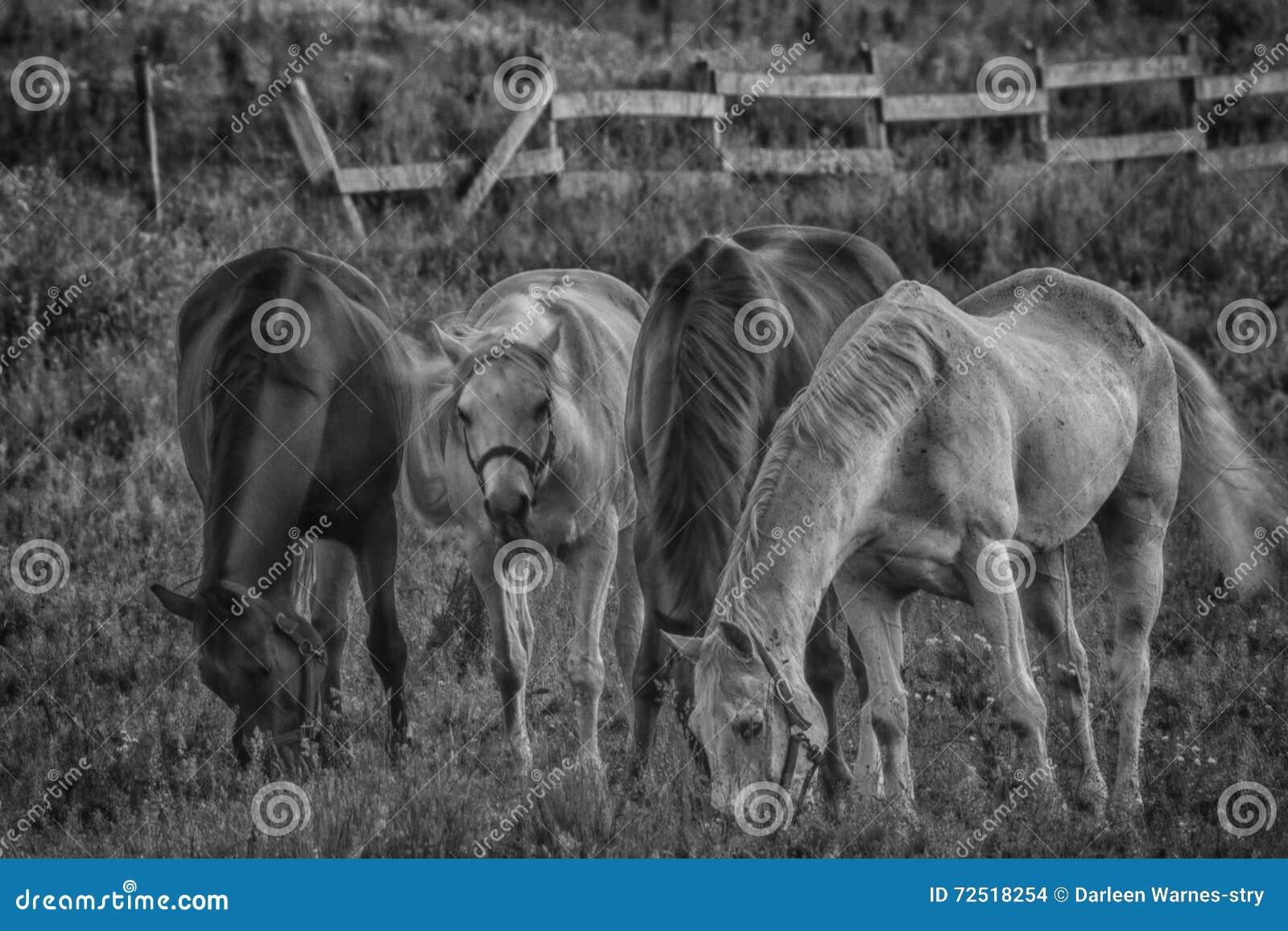 Het Weiden van het paard