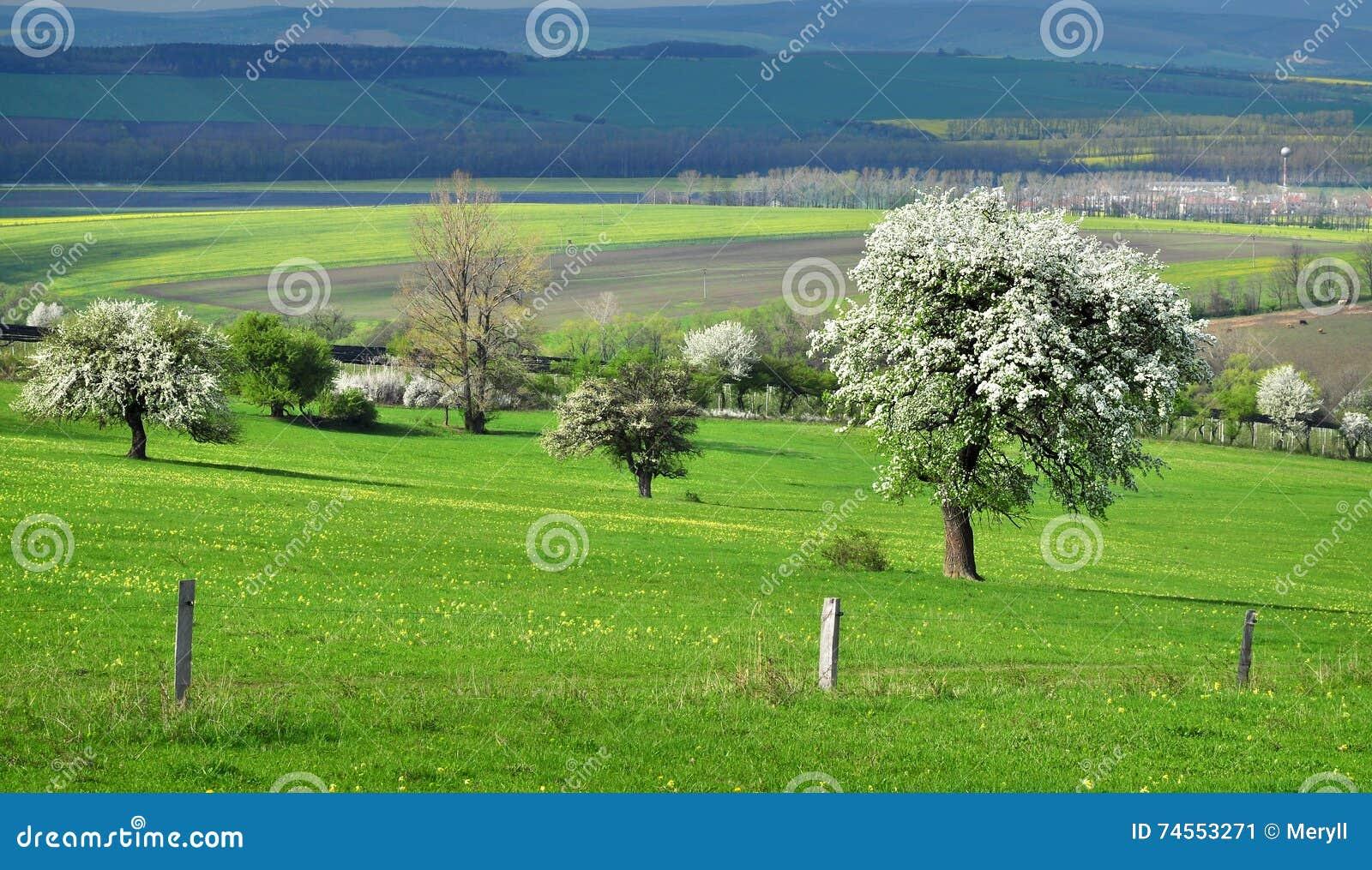 Het weiland van het aardlandschap