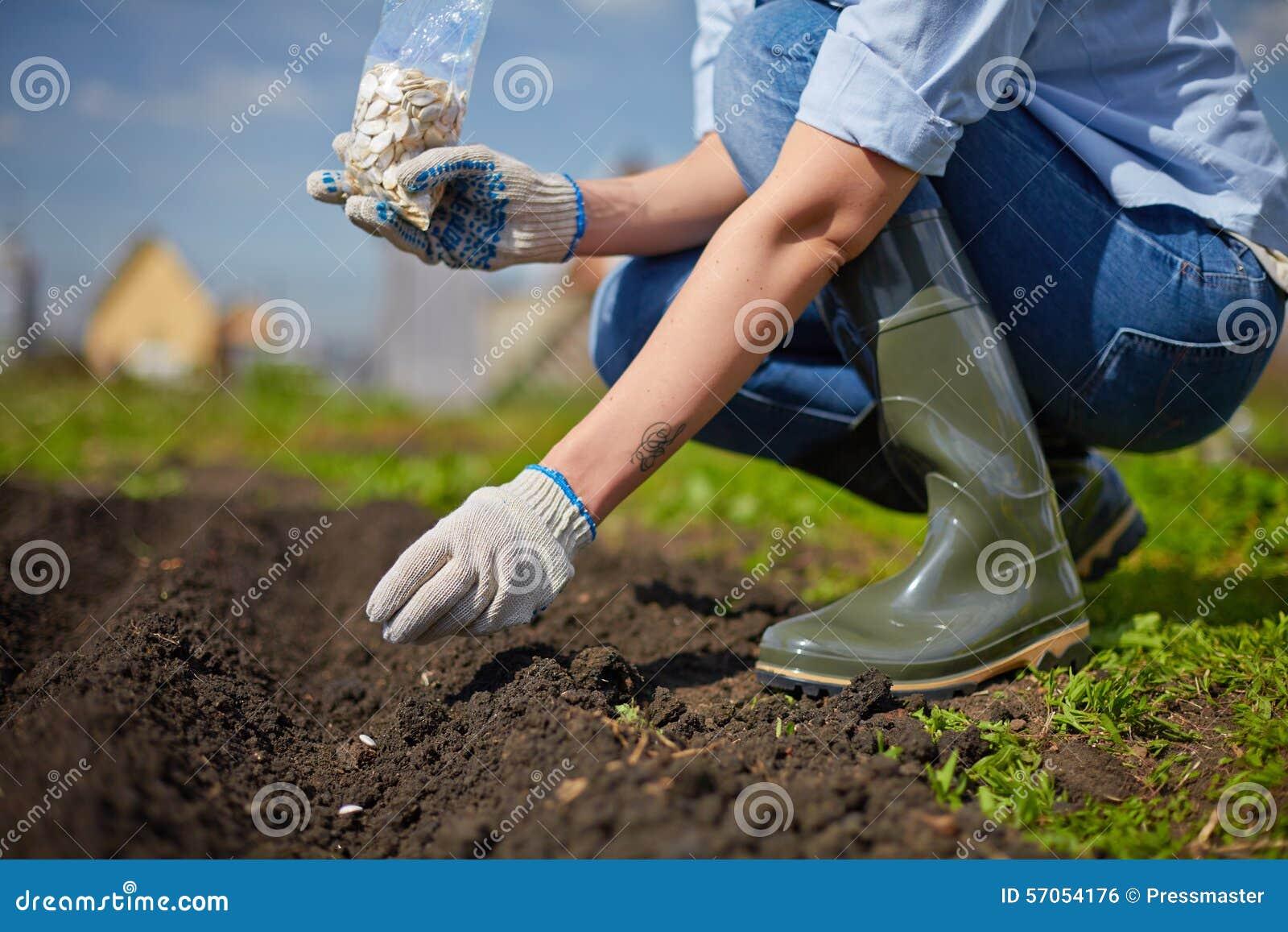 Het werk in de tuin