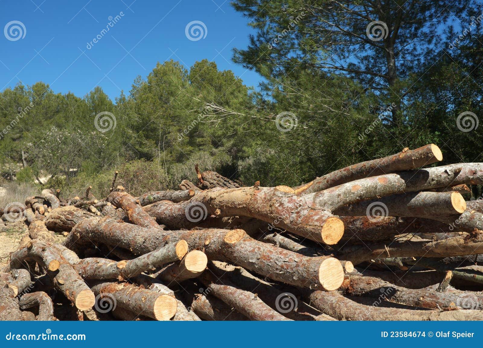 Het werk van de bosbouw
