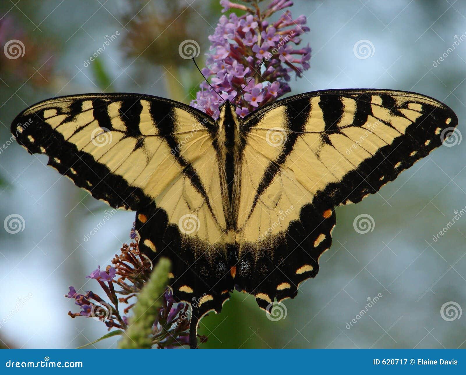 Het Werk van de Struiken van de vlinder