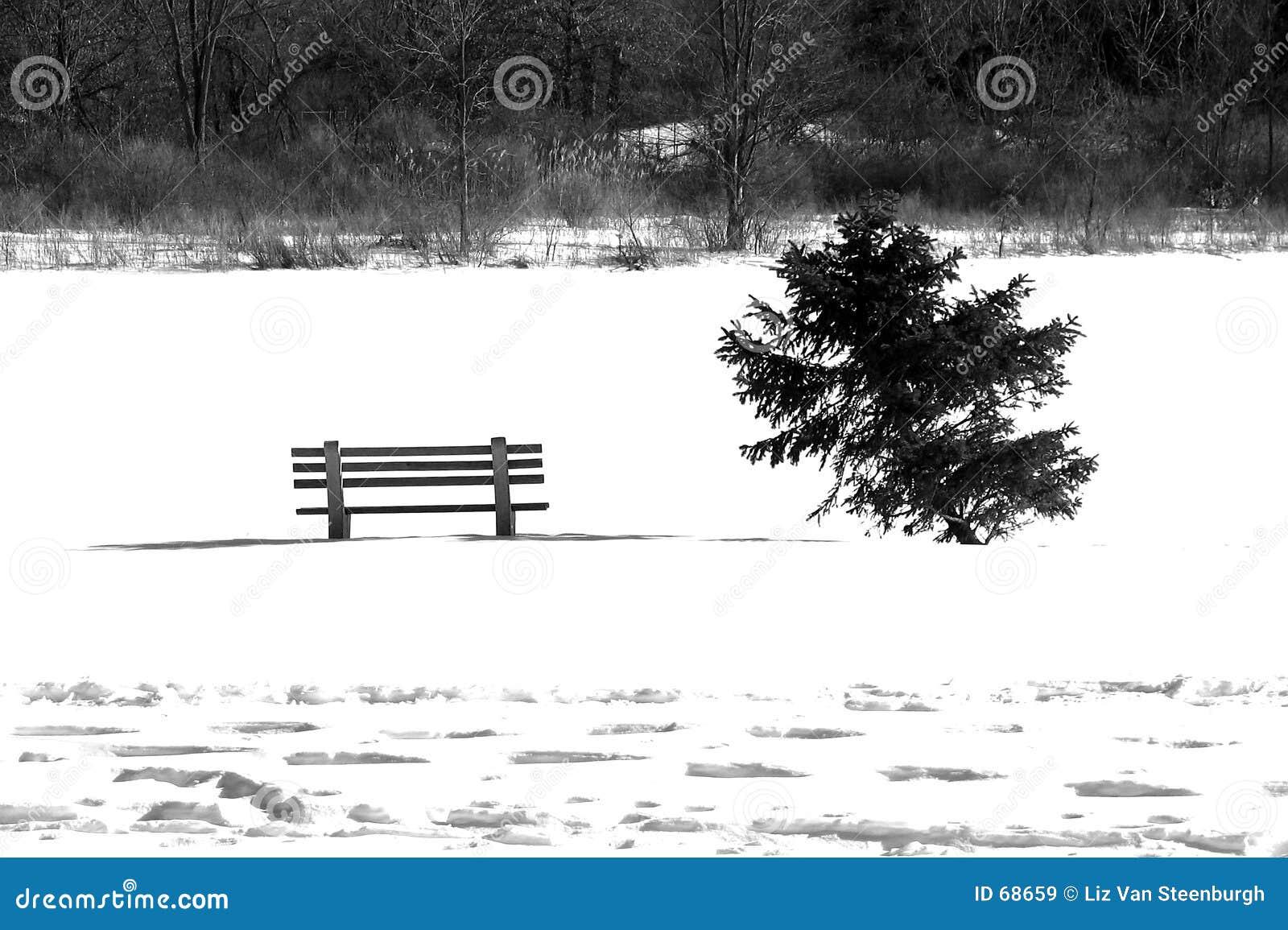 Het Wit van de winter