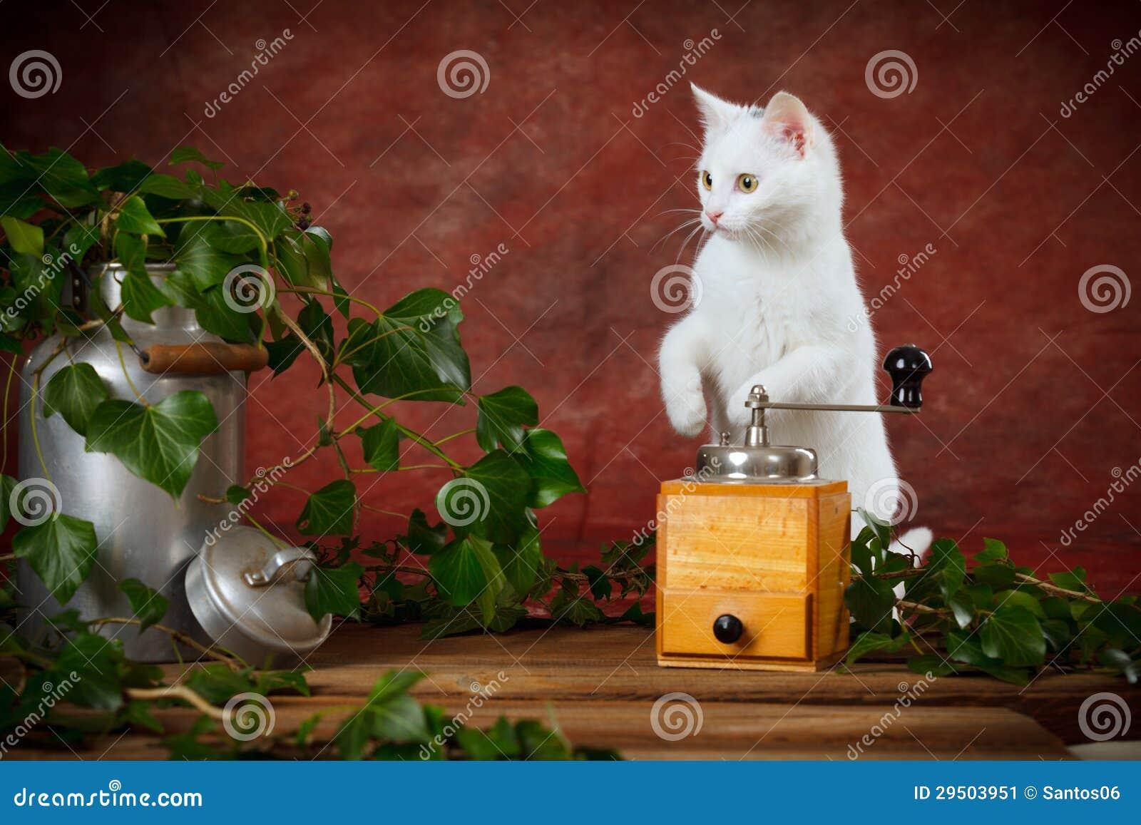 Het witte katje tussen melk kan en koffiemolen
