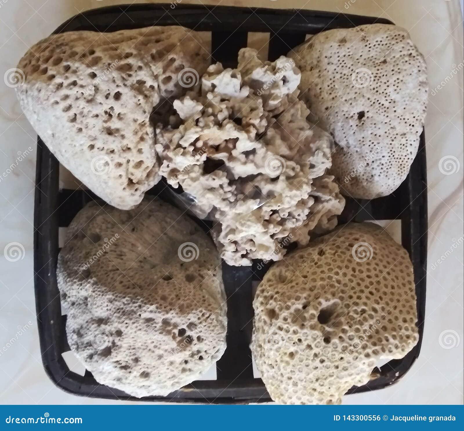 Het zand op de kust wordt samengesteld uit shell en gemalen koraal, dat het comfortabel schoon maakt, wit en