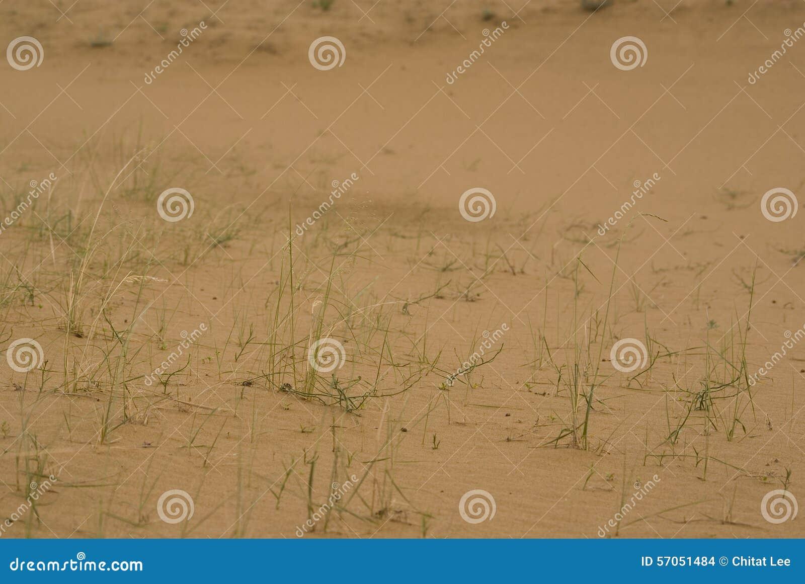Het Zandduinen van Saskatchewan
