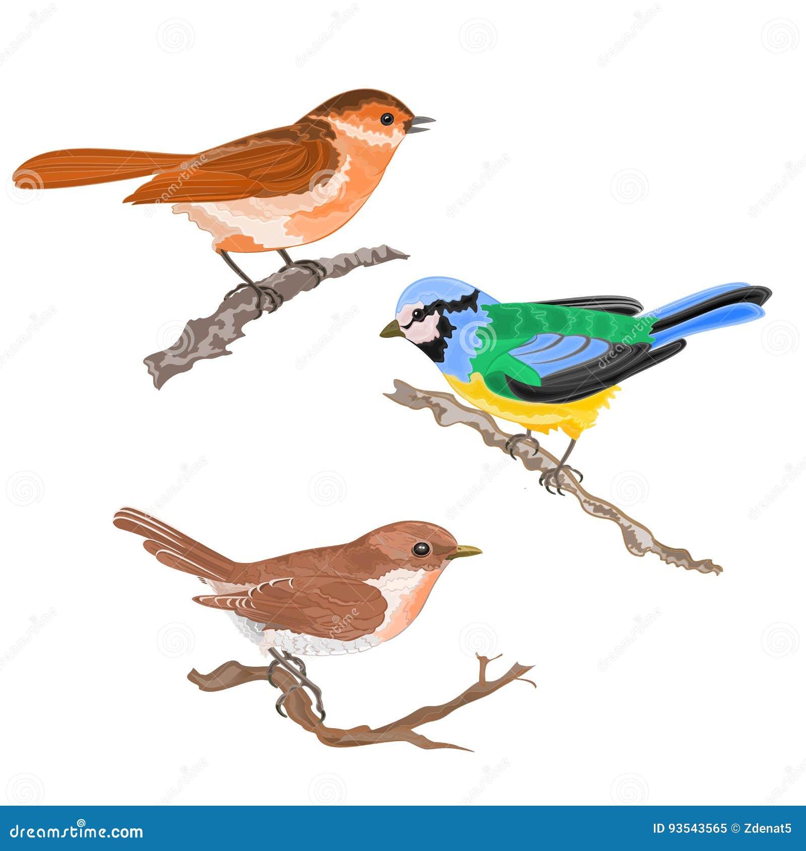 Het zingen de vogels op de meesmus van de takkengrasmus uitstekende hand trekken reeks één vectordierenillustratie
