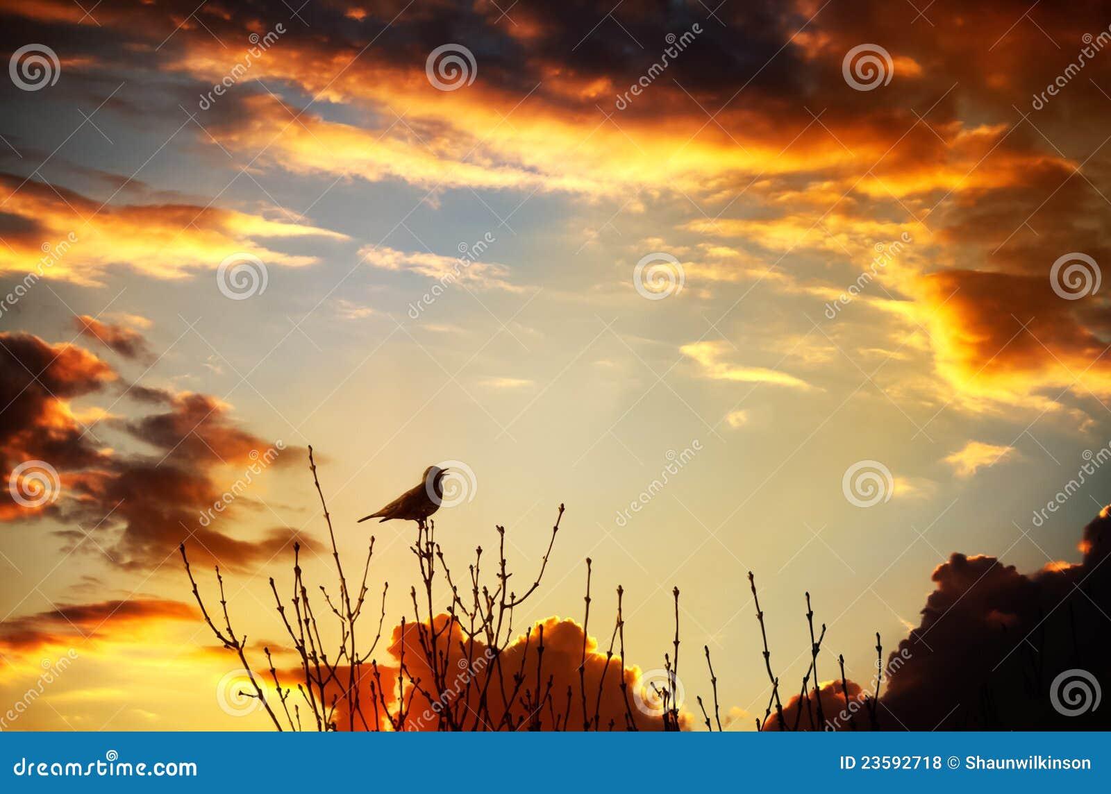 Het zingen van de vogel bij zonsondergang