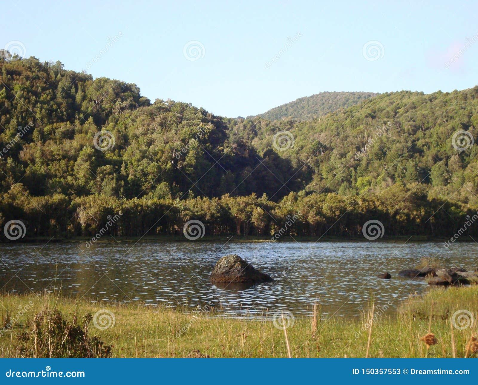 Het Zuiden van de Caletacondor van Chili