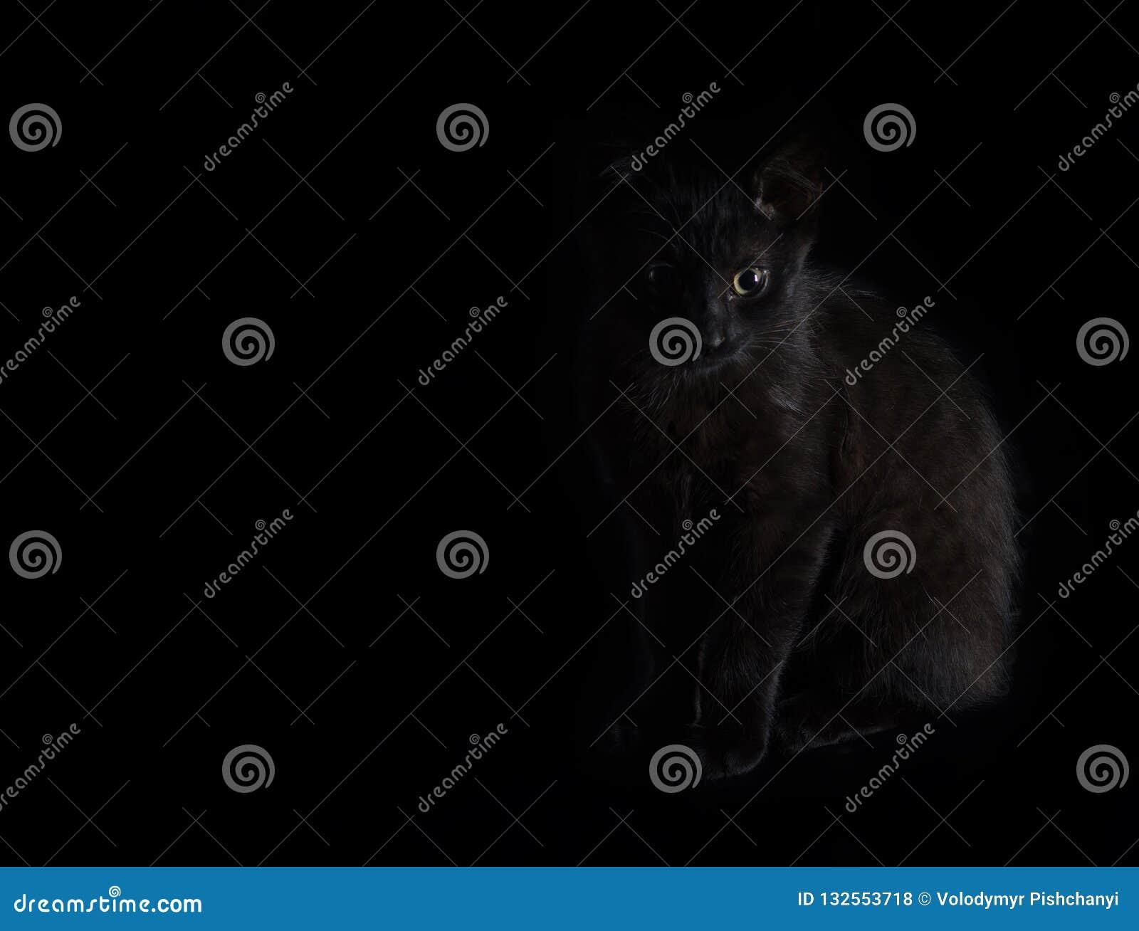 Het zwarte katje met groene ogen zit op een zwarte achtergrond