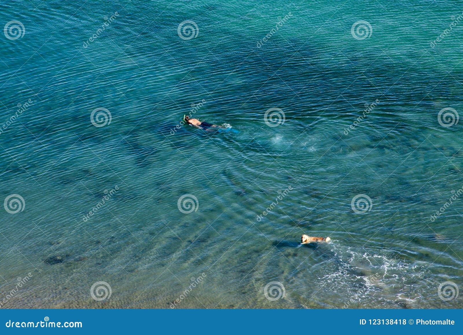Het zwemmen met hond