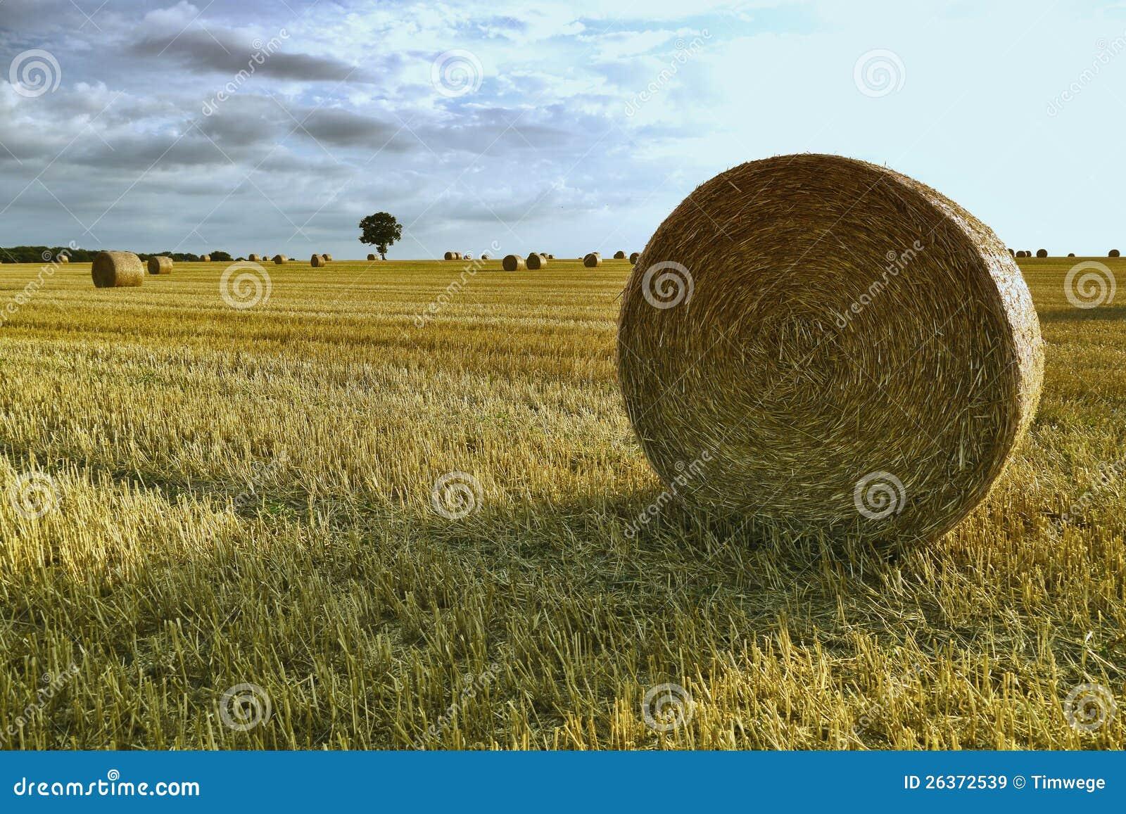 Heuballen auf einem Korngebiet