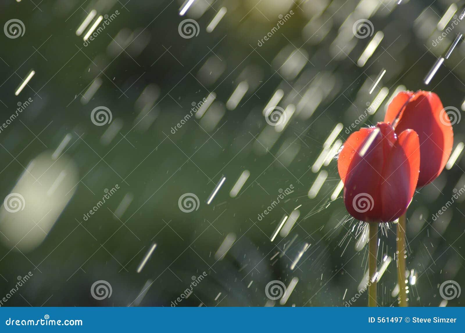 Heurtez par la pluie