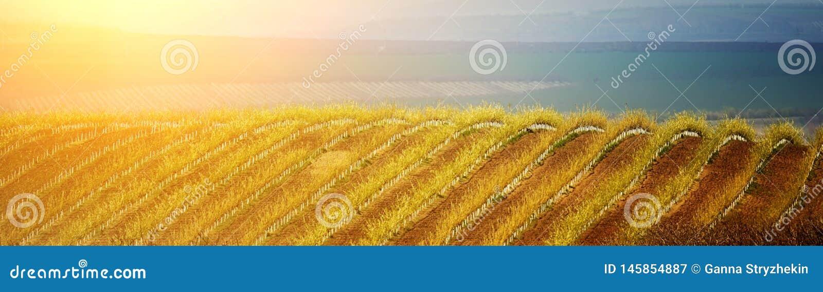 Heuvelig de lentelandschap van tuinen en eindeloze gebieden moldova