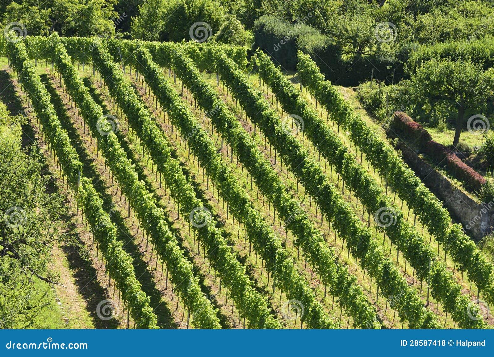 Heuvelige wijngaard #5, Stuttgart
