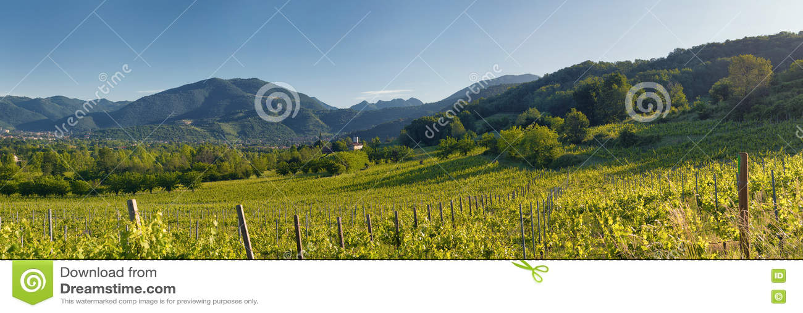 Heuvels en wineyards