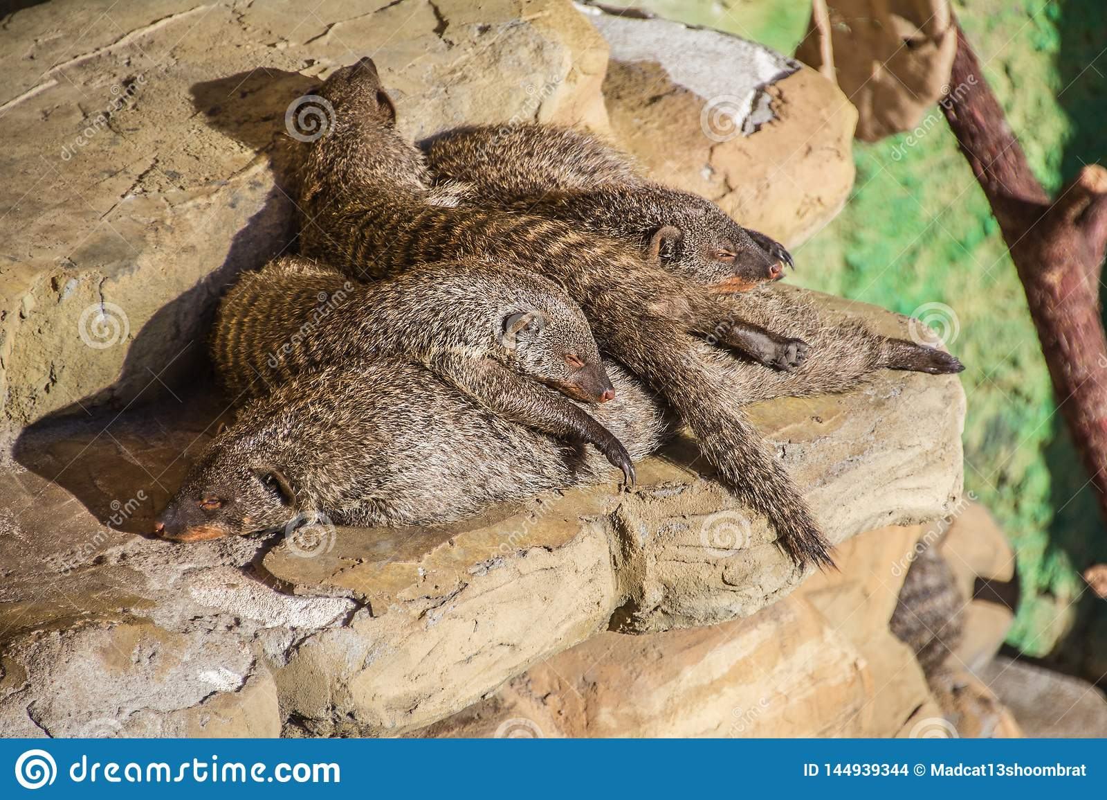 Hibernação da família
