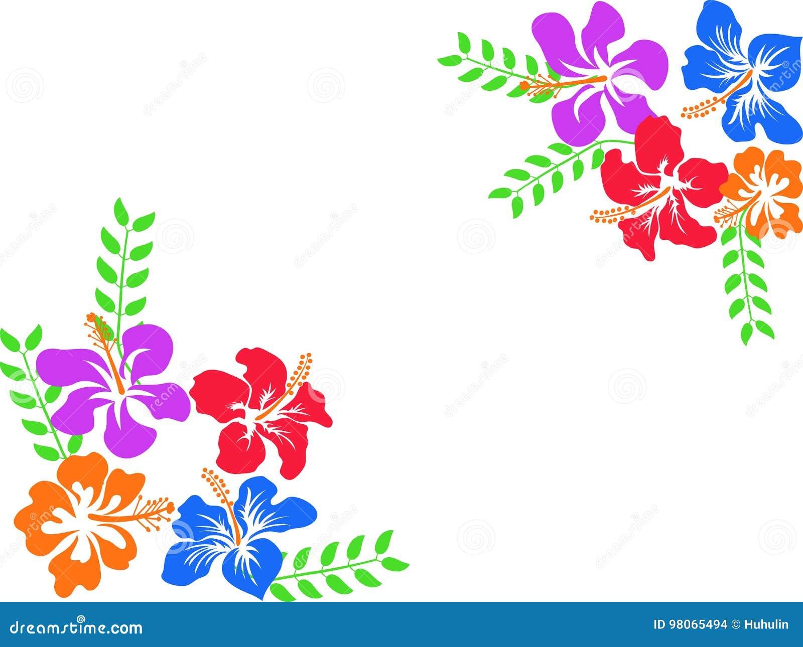 Hibiscus της Χαβάης χρώματος υπόβαθρο