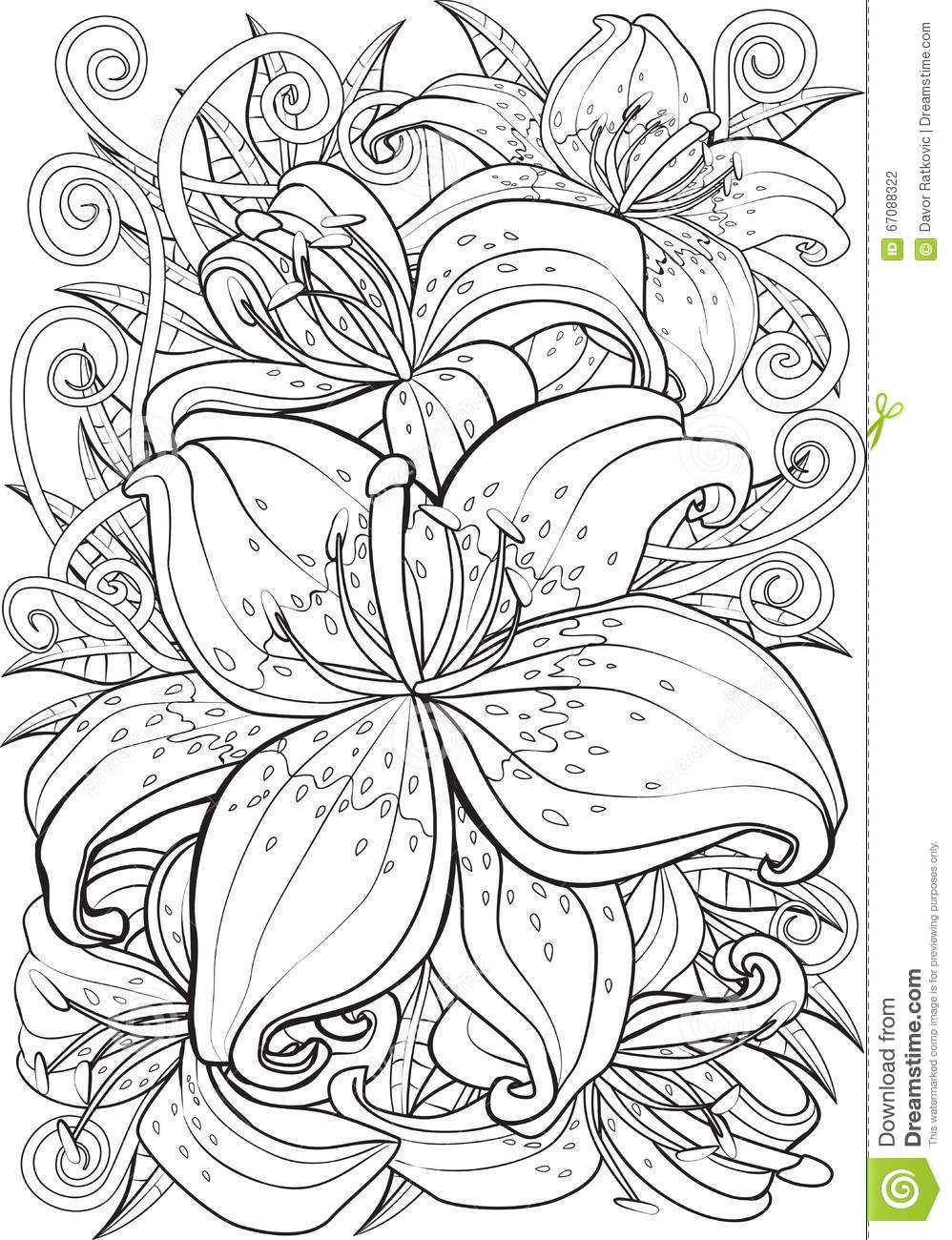 Tiger Lily Stock Vector Illustration Of Flower Drawing