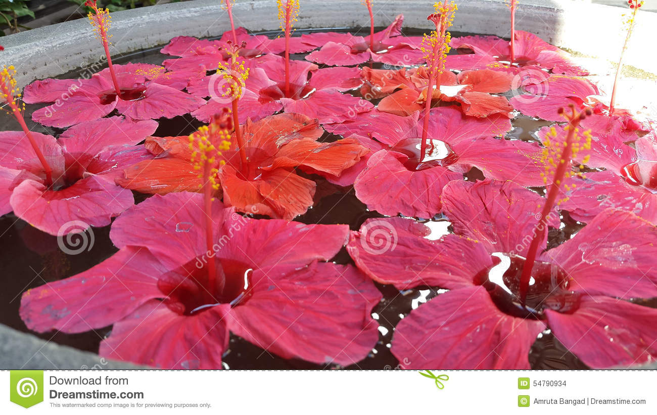 Hibiscus Floral Arrangement Stock Photo Image Of Stylish Artifact
