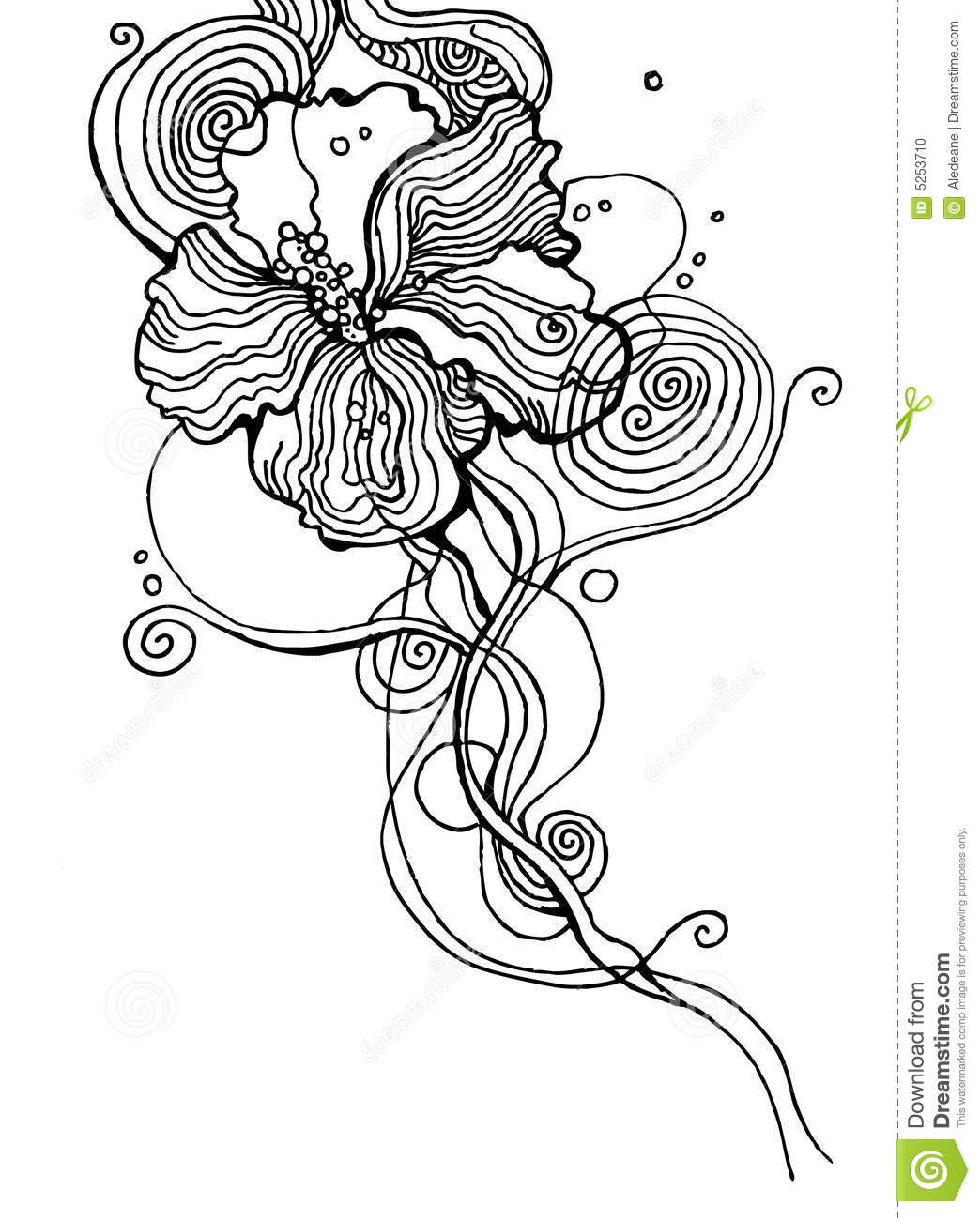 Hibiscus Flower Line Drawing : Hibiscus flower stock photo image