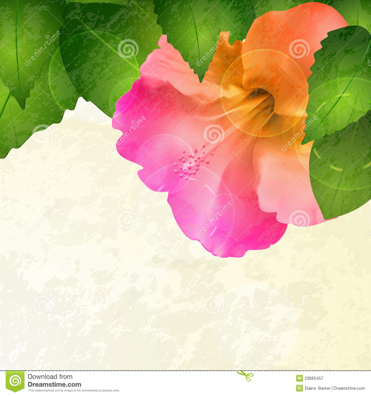 Hibiscus Flower Background With Grunge Effect Royalty Free