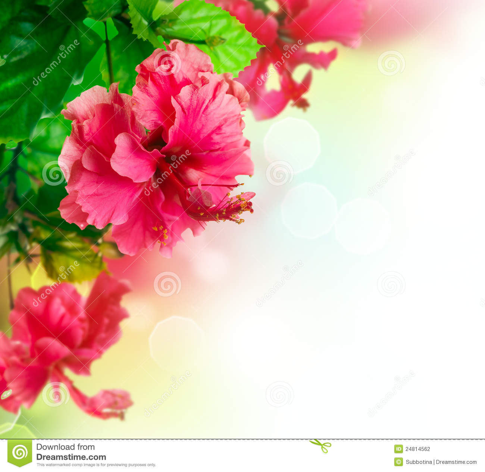 Hibiscus Flower Border Design Stock Photography Image