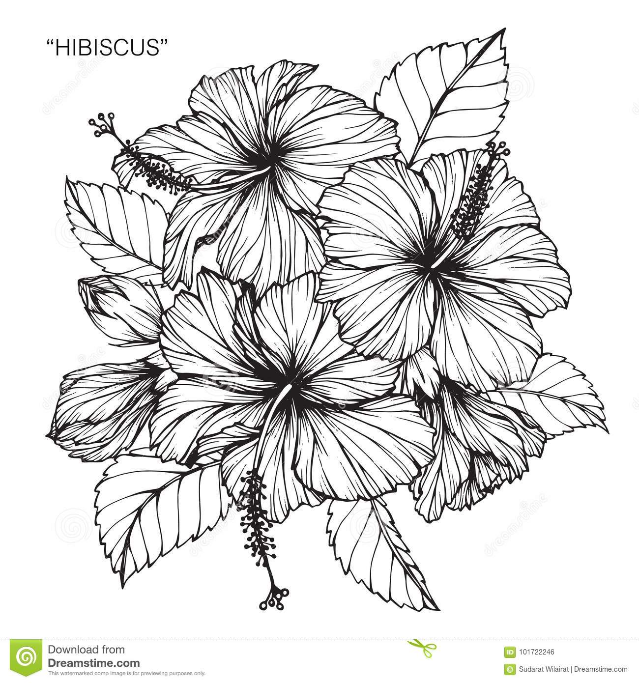 Line Art Flower Background : Hibiscus flower drawing and sketch stock illustration