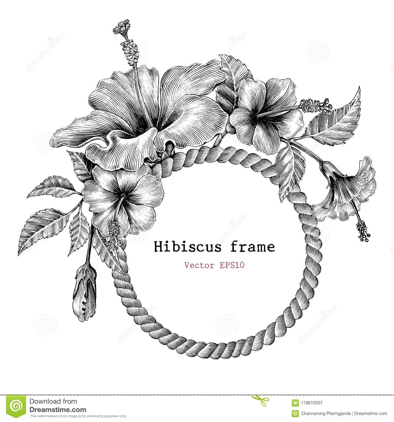 Hibiscus Flower Frame Hand Drawing Vintage Clip Art Stock