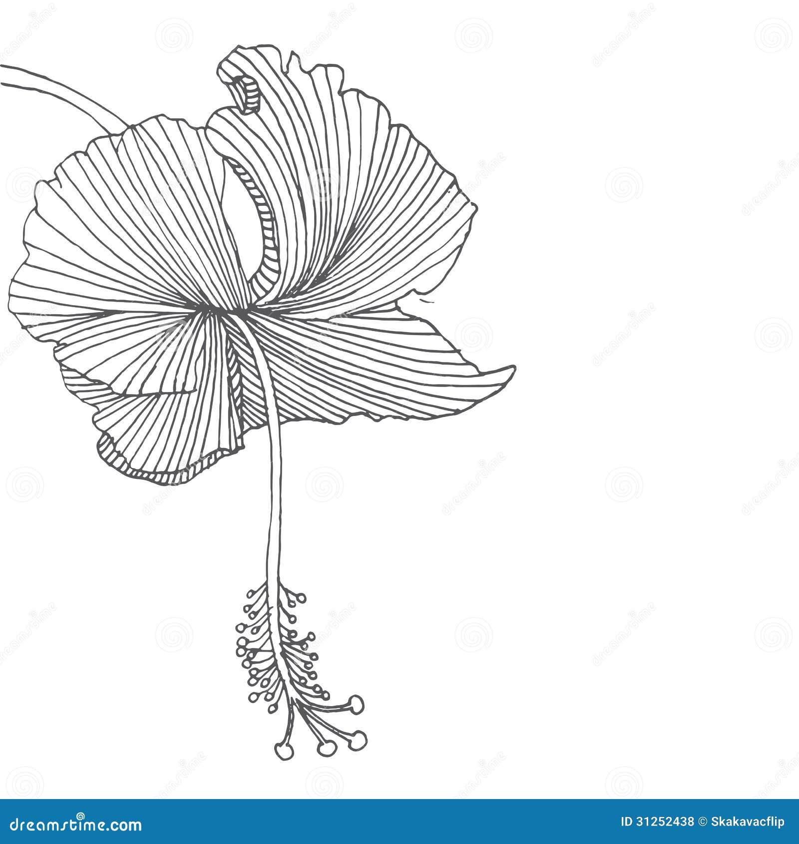 Hibiscus Flower Royalty Free Stock Photos Image 31252438
