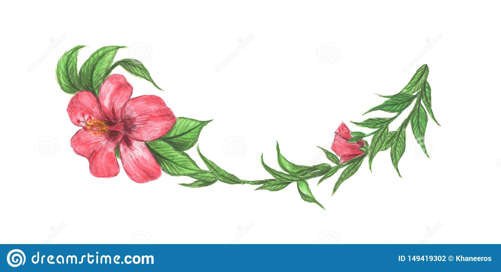 Hibiscus flower and leaves. Line borders, laurels and text divider. Watercolor illustration