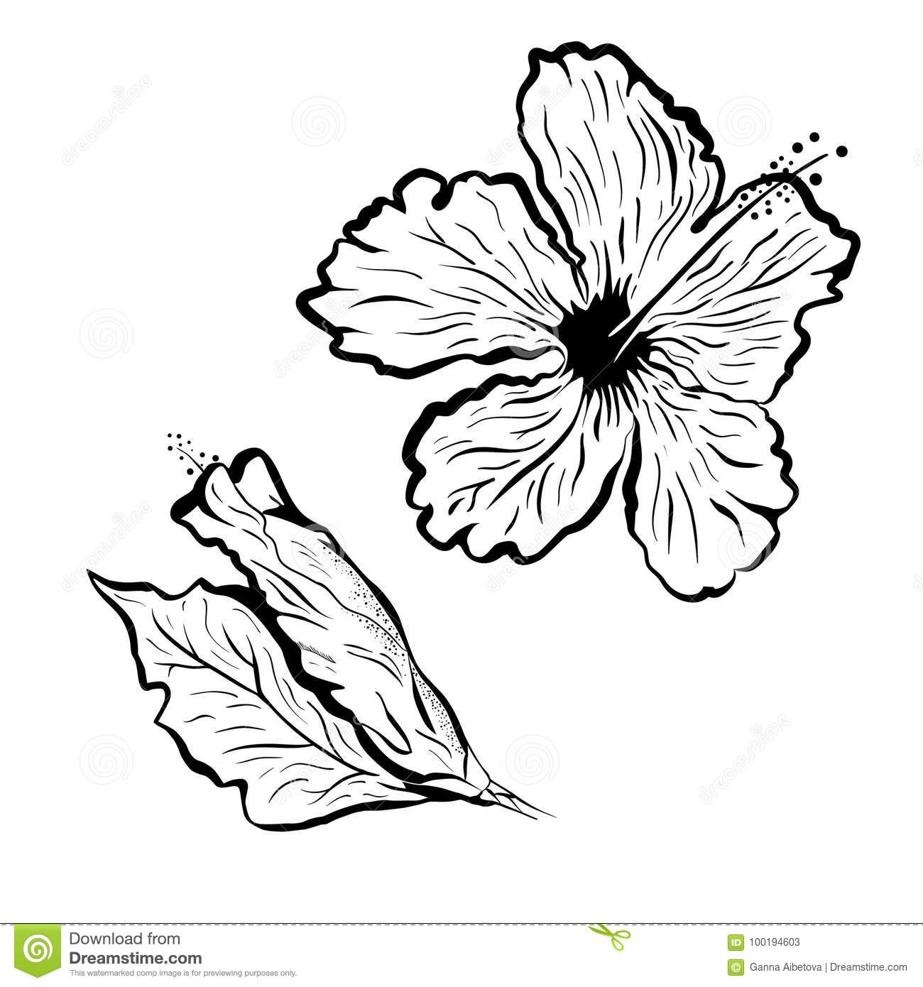 Hibiscus flower in tattoo style black and white graphic tropical hibiscus flower in tattoo style black and white graphic tropical flower izmirmasajfo