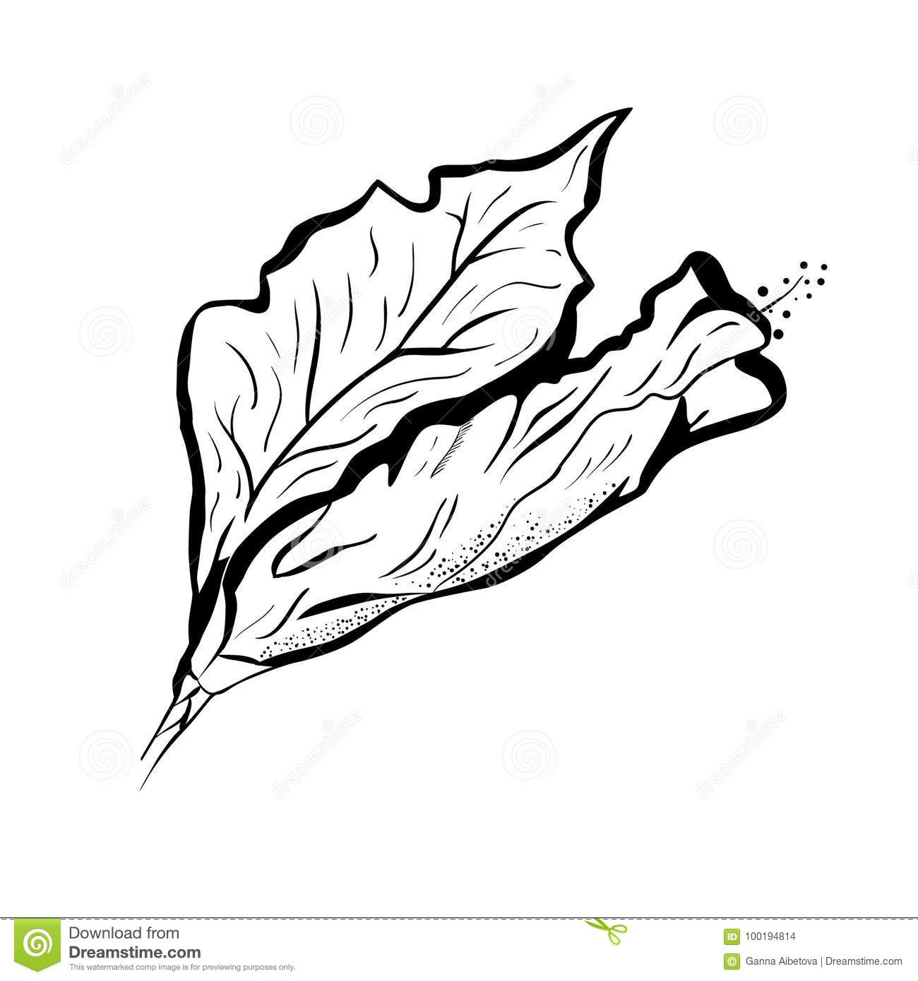 Hibiscus flower in tattoo style black and white graphic tropical download hibiscus flower in tattoo style black and white graphic tropical flower stock vector izmirmasajfo