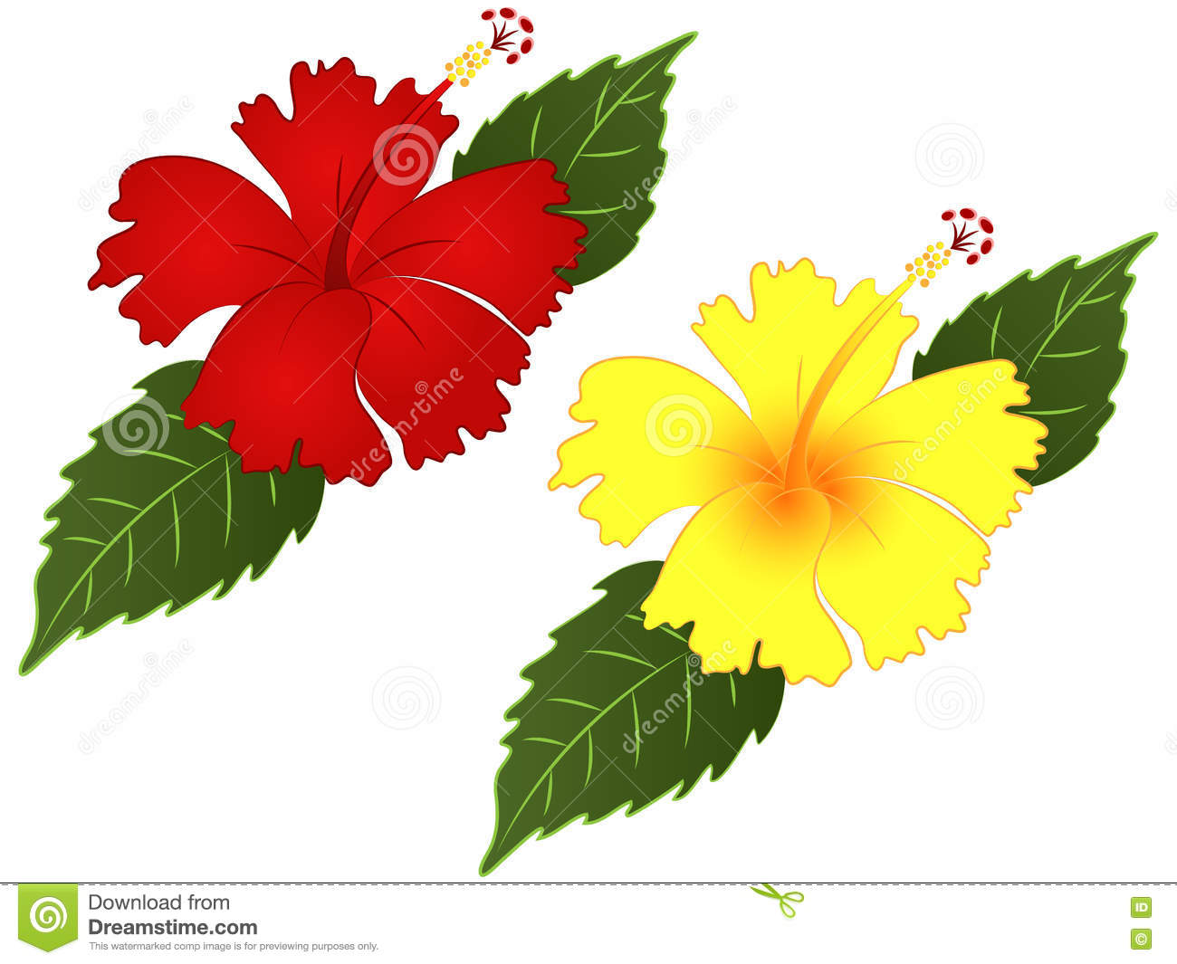 Hibiscus Flower Vector Illustration Clipart Stock Photo