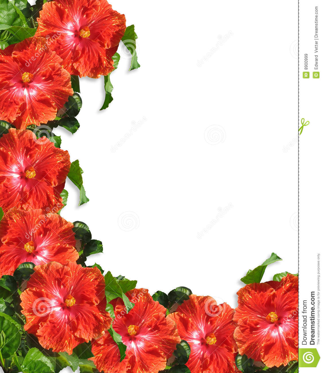 Hibiscus Flowers Border Background Stock Illustration Illustration