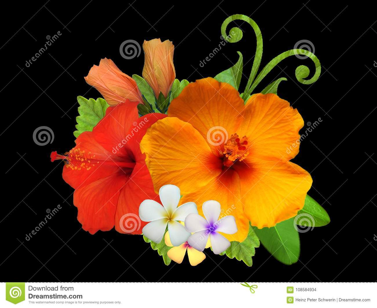 Hibiscus Flowers In Different Colors Stock Photo - Image of unique ...